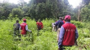 NDLEA-raids-smokers----joints--arrests-64-persons-with-hard-drugs353618850240199394