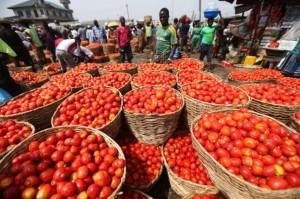 tomato-market